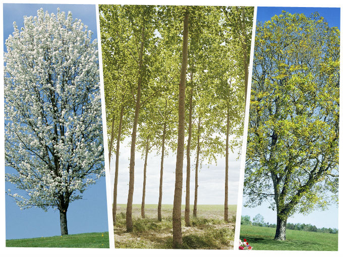 Rboles que da an tu casa soyactitud for Arboles preciosos para jardin