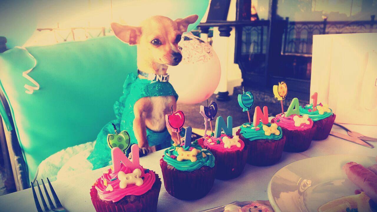 Como organizar una fiesta para perros soyactitud - Comidas para hacer en un cumpleanos ...
