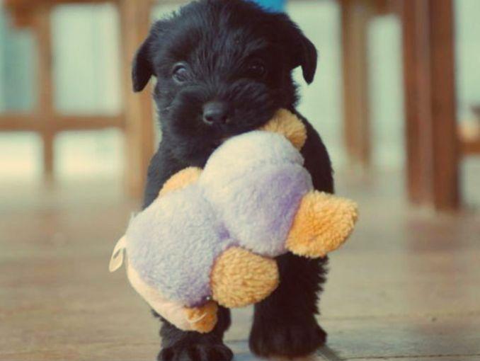 4 tips antes de tener un perro en casa soyactitud - Perros para tener en casa ...