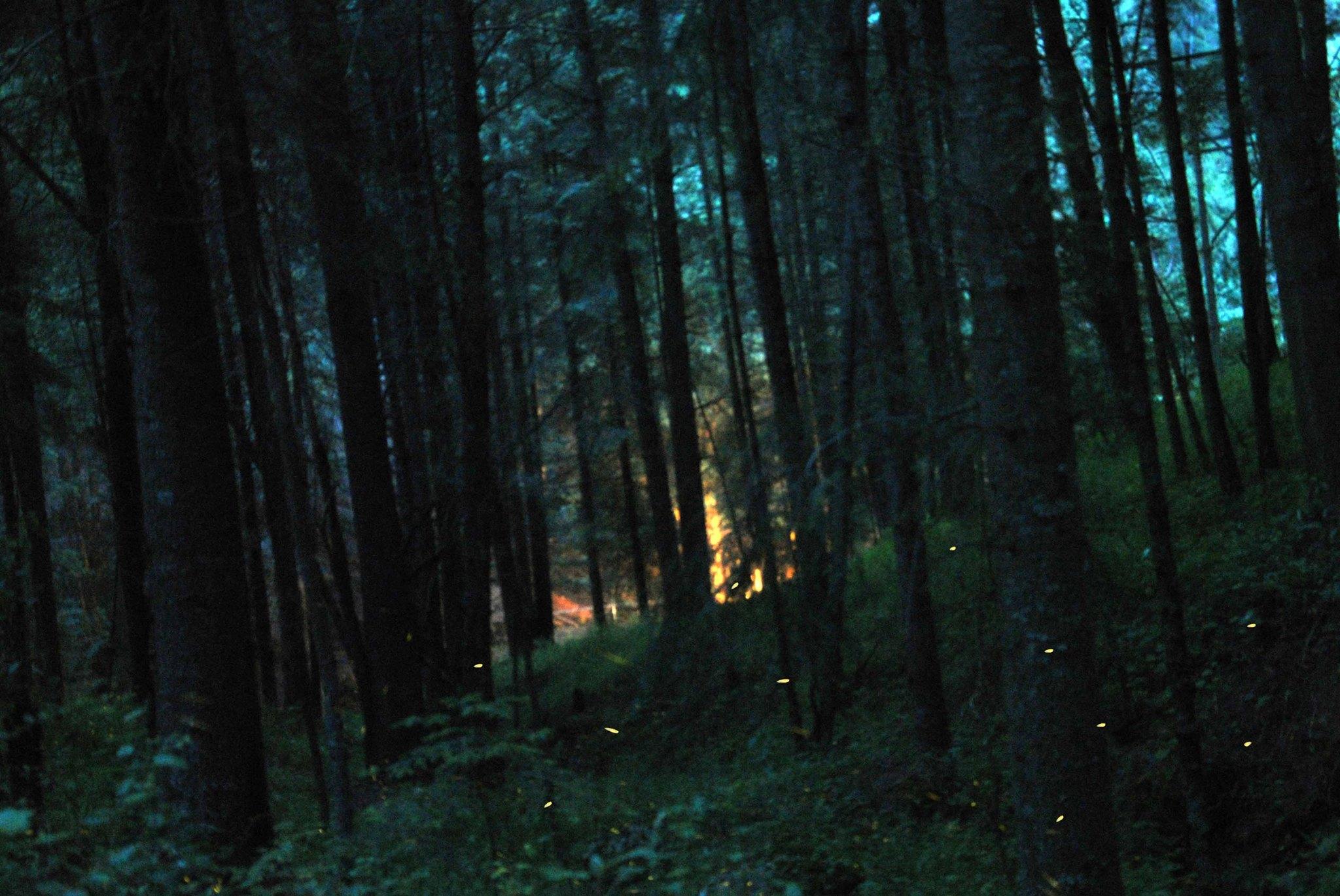 Descubre la magia del santuario de las luci rnagas Espectaculo de luciernagas en tlaxcala