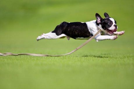 Resultado de imagen para perro corriendo