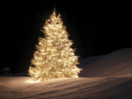Decora con plantas navide as actitudfem - Como se decora un arbol de navidad ...