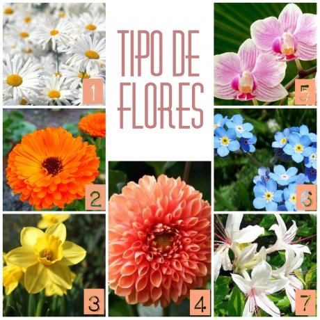 Significado De Las Flores Regalo Actitudfem