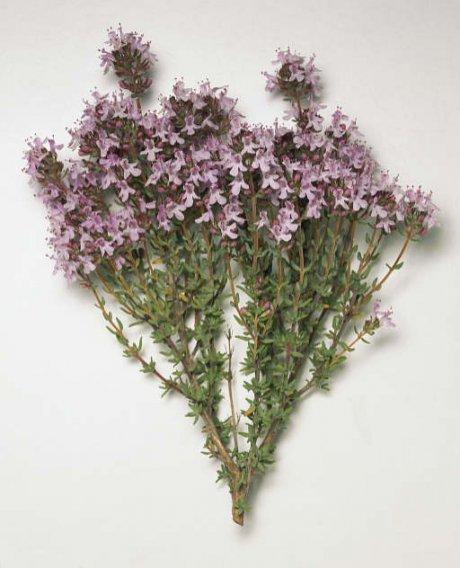 5 plantas para cocinar y decorar actitudfem - Flores para cocinar ...