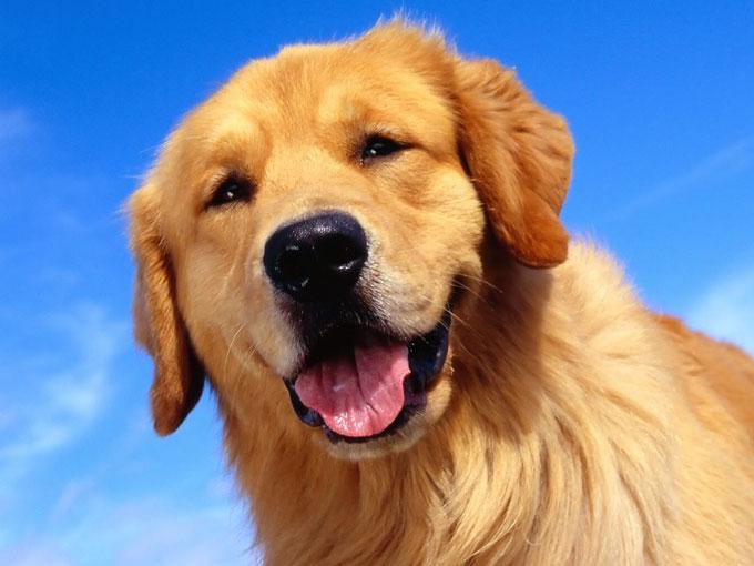 nuevo guía de acompañantes estilo perrito