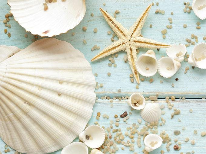 Diy conchitas de mar actitudfem - Como hacer conchas finas ...