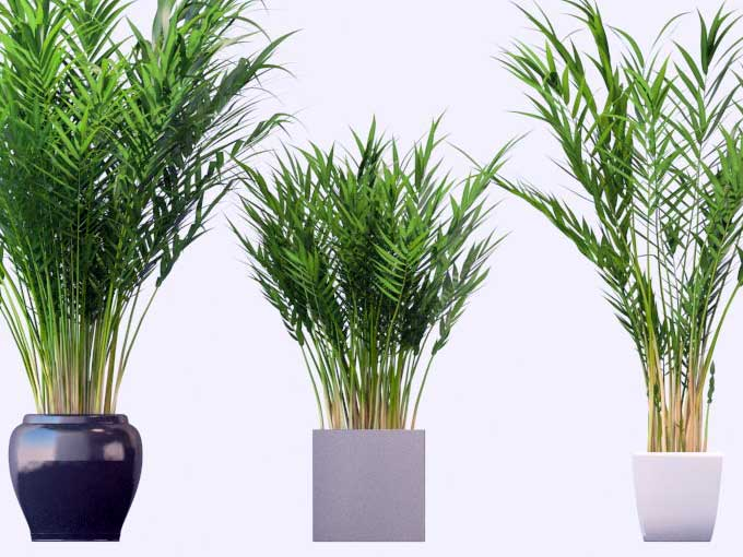 Plantas de interior para limpiar el aire de tu casa for Plantas decorativas de interior