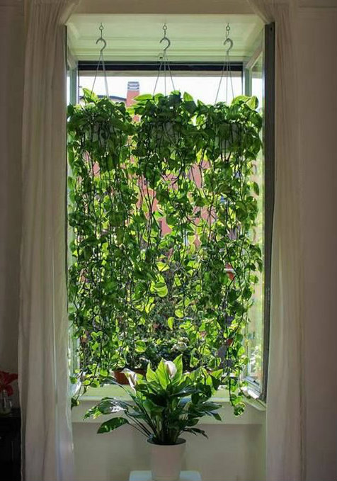 7 ideas para decorar tu ba o con plantas seg n pinterest - How to hang plants in front of windows ...