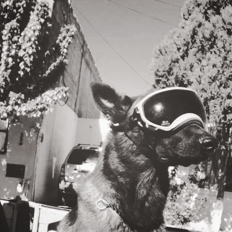 perros-rescatistas-19-s