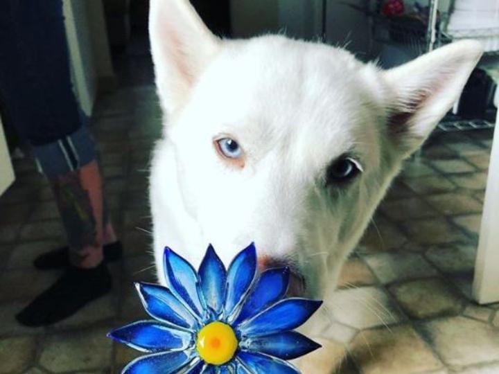 perro blanco con una flor azul hecha de vidrio