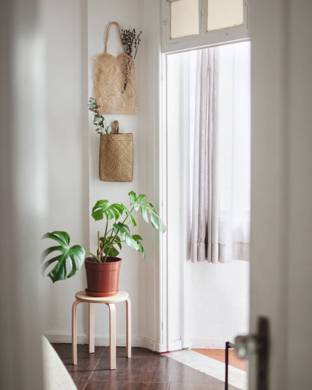 ideas-para-decorar-casa-con-monstera