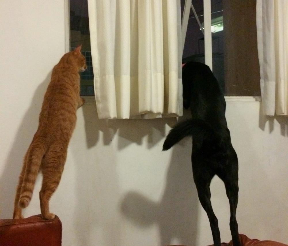 imagenes-de-perros-y-gatos-juntos