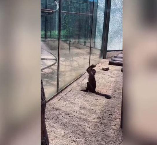 mono-golpea-jaula-zoologico-china