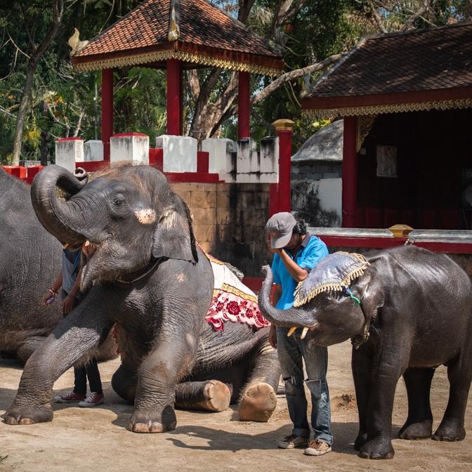 Elefantes en el zoológico de Phuket, Tailandia