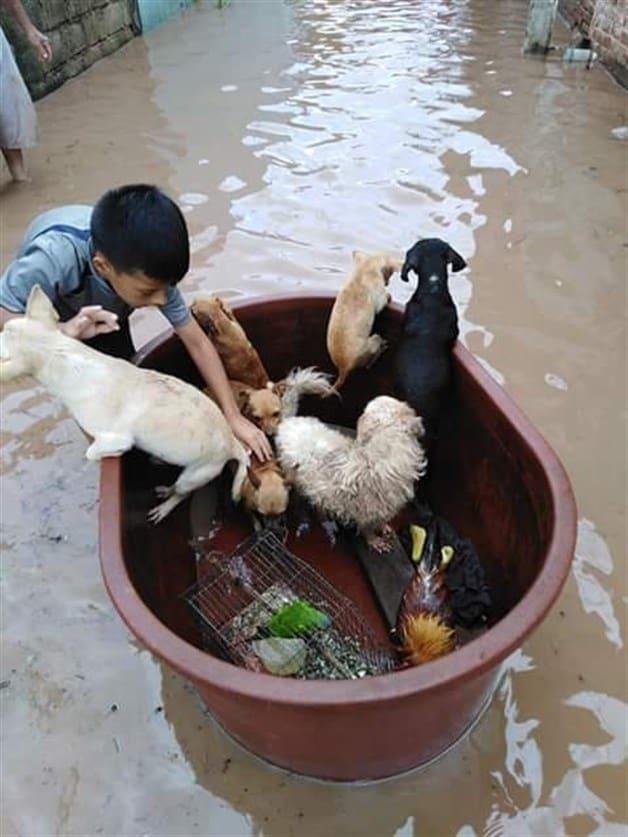 nino-salva-animales-inundacion