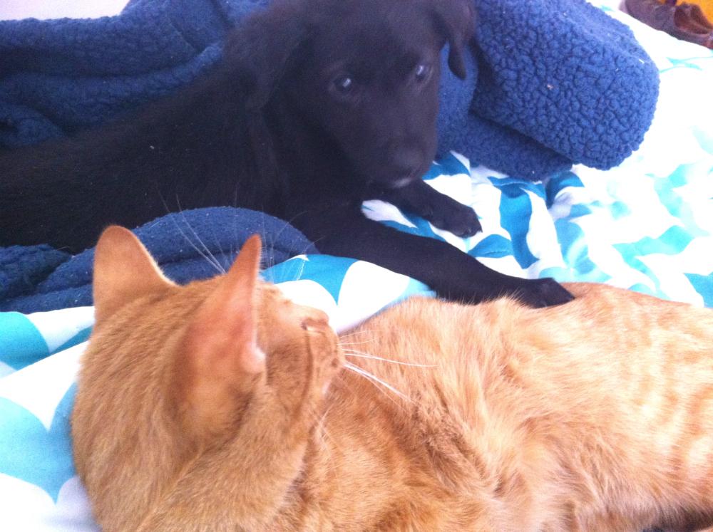 pasos-para-acercar-perro-y-gato
