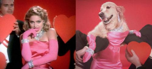 perrito-que-imita-a-madonna-fotos-corazones