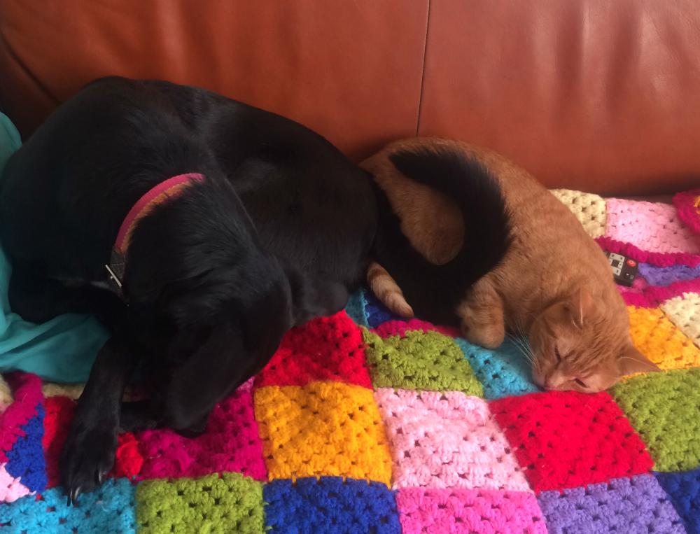 perritos-y-gatitos