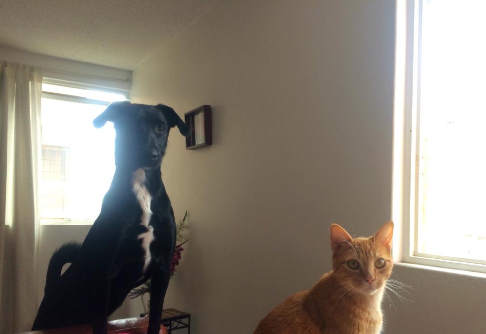 perro-y-gato-amigos