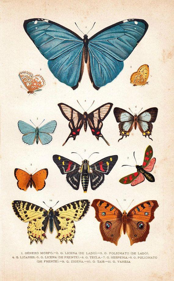 Ilustración de finales del siglo XIX con imágenes botánicas de mariposas.