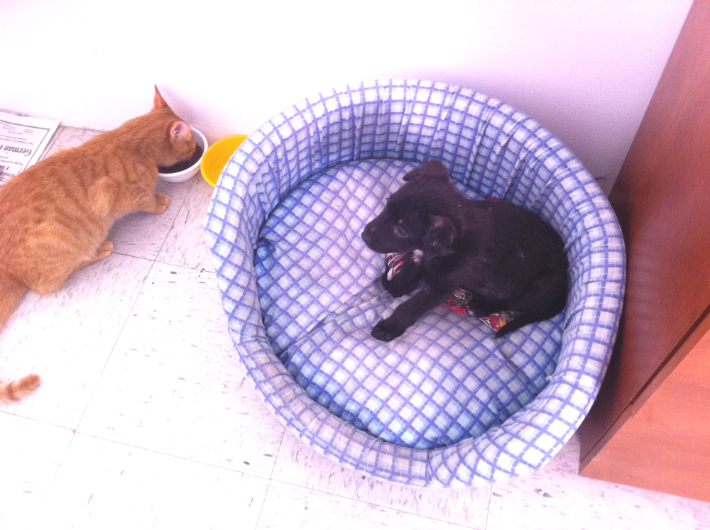 presentar-a-un-perro-y-a-un-gato