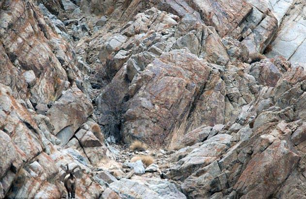 puedes-ver-al-leopardo