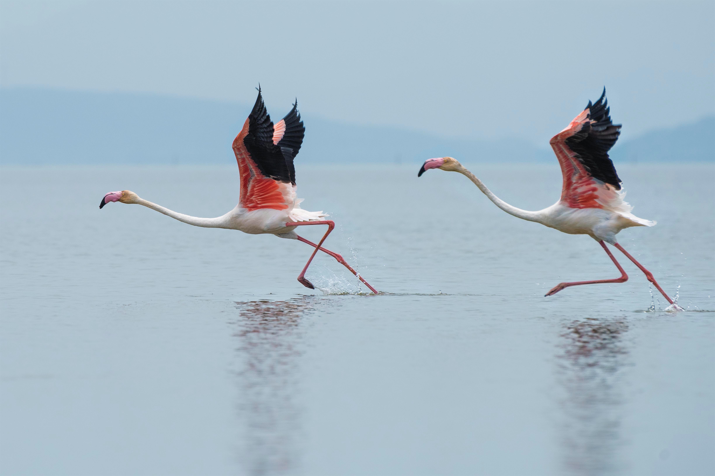 sacrifican-flamingo-que-fue-herido-por-nino-en-zoologico