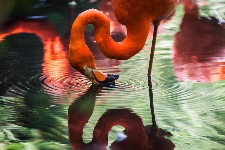 sacrificaran-flamingo-que-fue-herido-por-nino-en-zoologico
