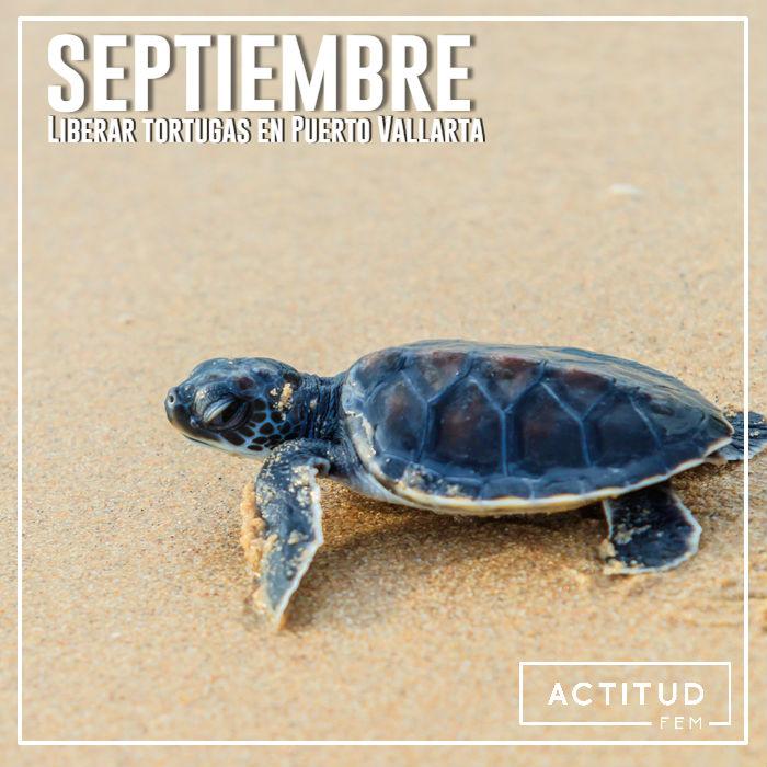 Liberar tortugas Puerto Vallarta