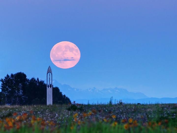 Luna rosada embellece un paisaje con flores de todos los colores.