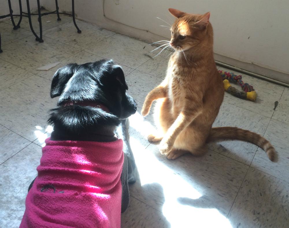 un-perro-y-un-gato-pueden-ser-amigos