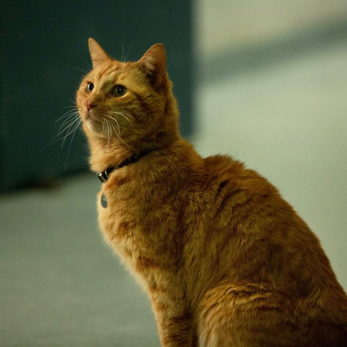ursula-brauner-goose-gato