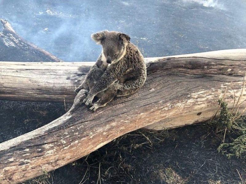 Resultado de imagen de australia en llamas imagenes