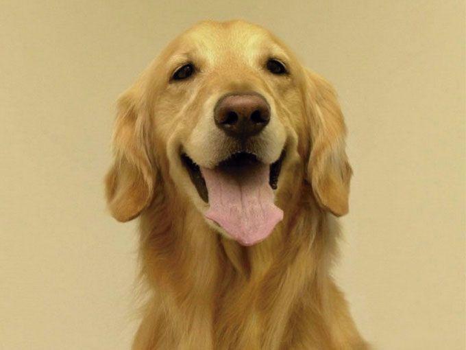 Estas son las 10 razas de perros que viven m s actitudfem - Es malo banar mucho a los perros ...