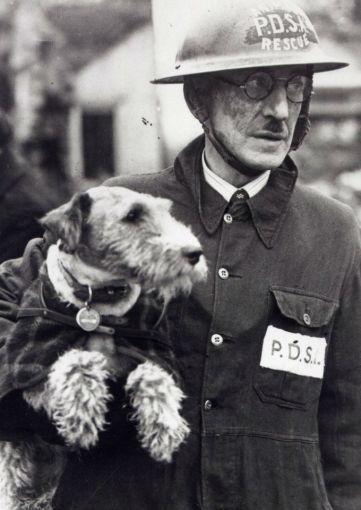 """""""Beauty"""", un hermoso fox terrier, fue honrado con la medalla Dickin el 12 de enero de 1945 por ayudar a localizar a las víctimas enterradas tras un ataque aéreo mientras servía en el Escuadrón de Rescate, durante la Segunda Guerra Mundial."""