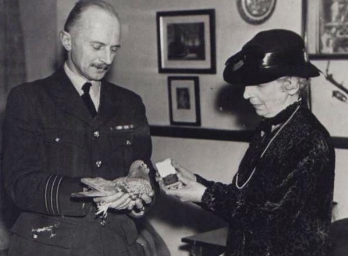 """Winkie, la paloma, recibió el premio el 2 de diciembre de 1943 por su valiente servicio: """"la entrega de un mensaje en condiciones extremadamente difíciles que contribuyó al rescate de un equipo de aire mientras servía en la Royal Air Force""""."""