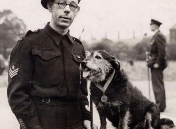 Rip era un perro vagabundo que recibió la Medalla Dickin en 1945, luego de que ayudara a rescatar a cientos de personas atrapadas bajo los escombros durante la Segunda Guerra Mundial.