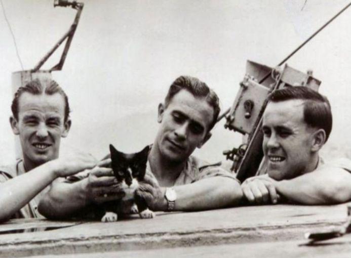 Simon es el único gato que ha recibido la Medalla Dickin, por evitar que los ratones se comieran la comida de los marinos y así, permanecieran con vida. Formó parte de la balandra de guerra: HSM Amethyst durante el Incidente del Yangtsé (Guerra Fría).