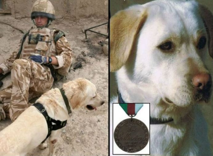 Sasha, un labrador retriever, tenía 4 años cuando murió. Era un perro rastreador del Ejército de EEUU. Olfateó un sinfín de armas ocultas en Afganistán y así salvó la vida de los militares.