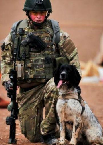 Theo y su amigo, el militar Liam Tasker eran inseparables, tanto que murieron al mismo tiempo en una emboscada. El perro recibió la cruz de la Victoria; el premio de más alta distinción que un animal puede recibir. Junto con Liam, detectaron 14 bombas puestas por los talibanes y depósitos de armas que salvaron incontables vidas humanas.