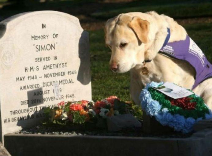 Endal fue votado como el perro del Milenio y acreedor de la medalla por salvar la vida de su amo; Allen Parton en 2001 cuando fue atacado en su vehículo. El perro arrastró a Allen hasta un lugar seguro, lo cubrió con una manta y corrió a buscar ayuda. Aquí en la tumba de Simón el gato.
