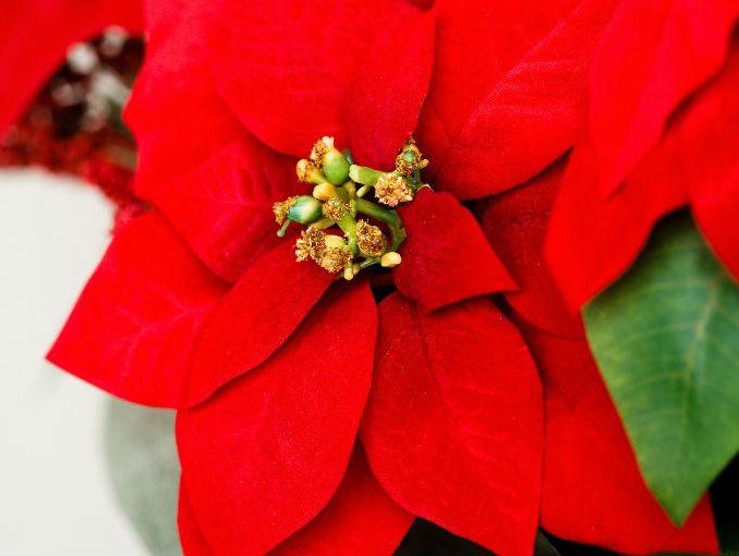 10 Tips Para Cuidar Tu Nochebuena Actitudfem