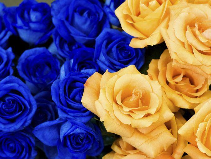 Te Gustan Las Rosas Azules Actitudfem