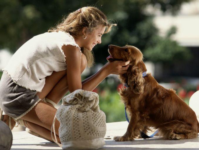 entrenamiento de su perros en casa