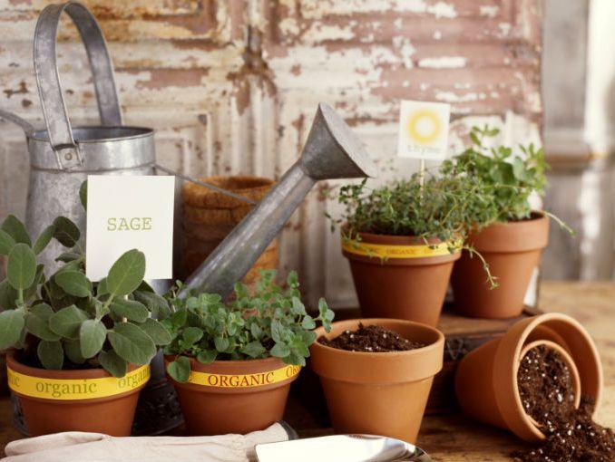 Plantas para cocinar soyactitud for Plantas aromaticas para cocinar