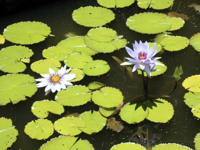C mo hacer un jard n acu tico actitudfem for Estanques y jardines acuaticos