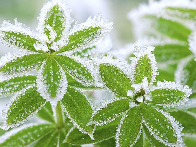 Recorta tus plantas para el invierno actitudfem - Plantas de invierno para exterior ...