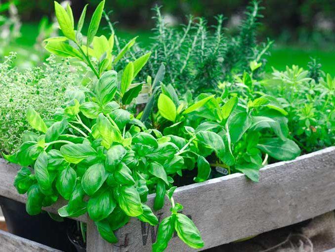 No hay nada más revolucionario que plantar tu propio huerto | ActitudFem