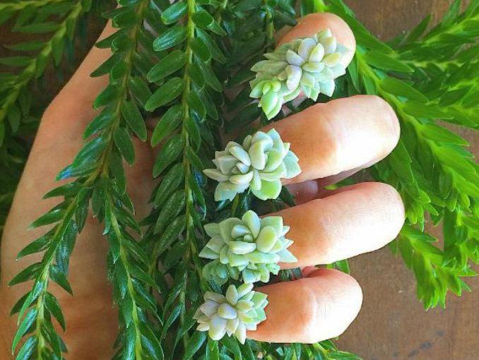 Manicure y arte en uñas de plantas suculentas | ActitudFem