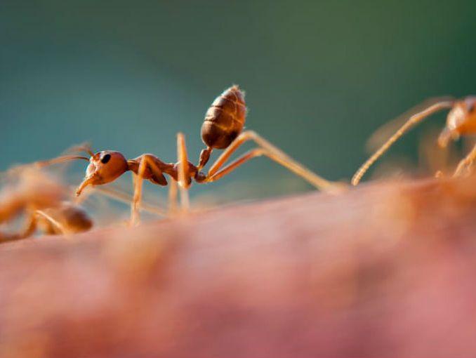 C mo eliminar las hormigas soyactitud - Como eliminar las hormigas de la cocina ...
